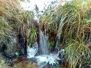 A samll waterfall flows through vegetation and one can see the snow above.